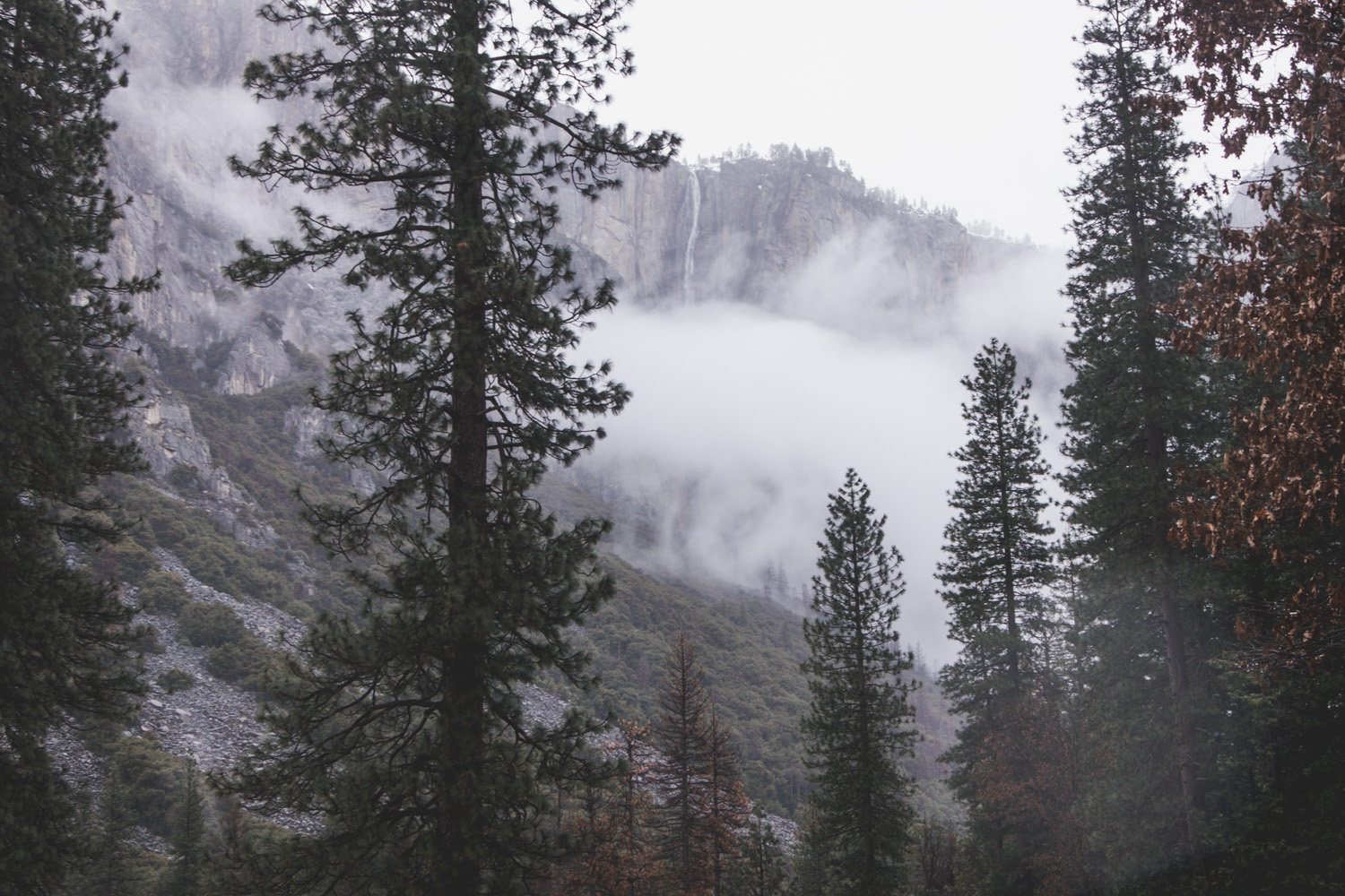 Fog in the trees in Yosemite in winter against tall cliffs
