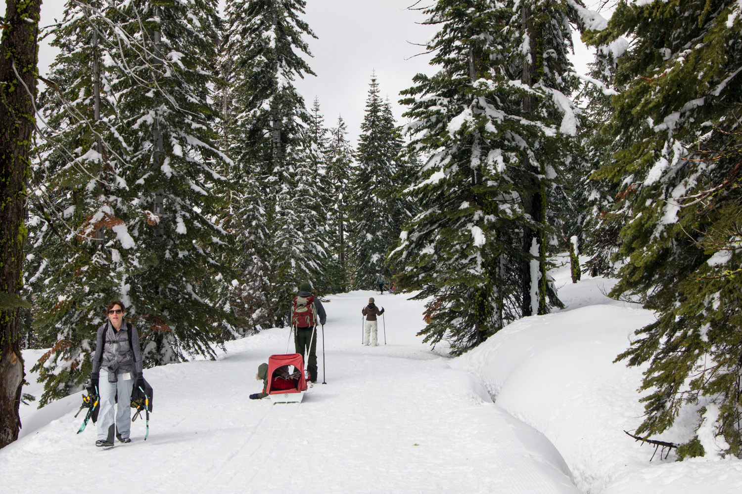 People snowshoeing and cross country skiing in Badger Pass Ski Area in Yosemite
